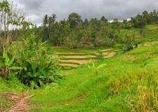 0062 Jatiluwih Rice Terraces