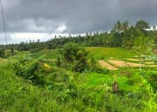 0064 Jatiluwih Rice Terraces