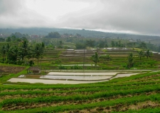 0065 Jatiluwih Rice Terraces
