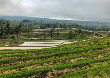 0069 Jatiluwih Rice Terraces