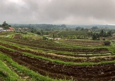 0071 Jatiluwih Rice Terraces