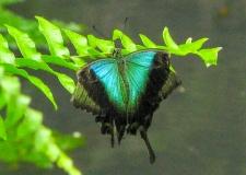 0100 Bali Butterfly Park