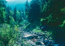 112.5. Wasserfall PuE