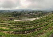 0070 Jatiluwih Rice Terraces