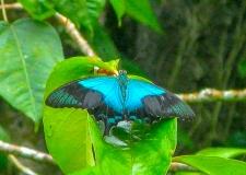 0101 Bali Butterfly Park