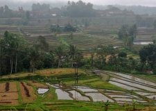 0066 Jatiluwih Rice Terraces